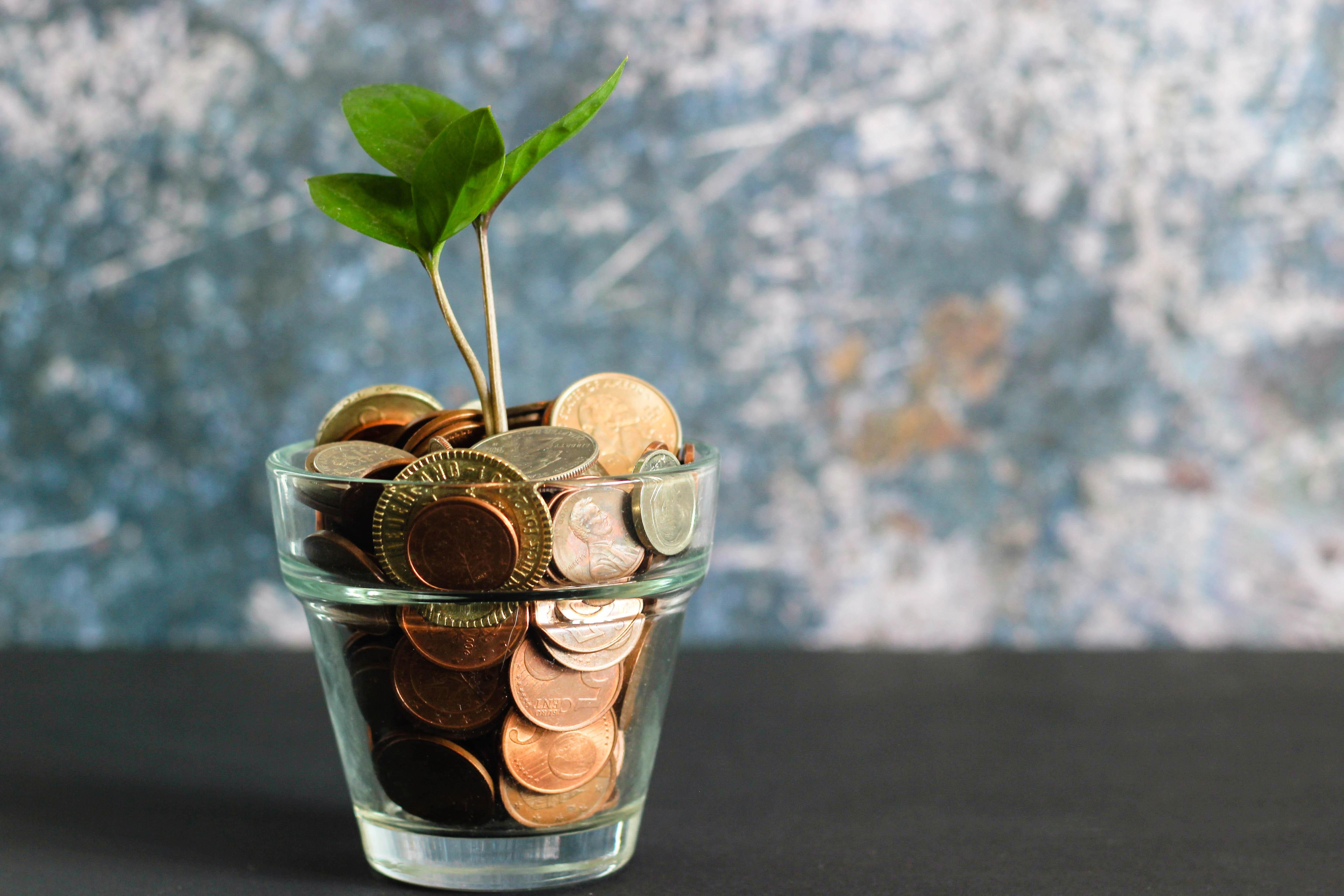 Earn money !