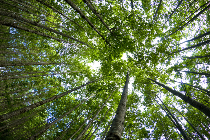 Credit Agricole Assurance undertakes to plant 500,000 trees